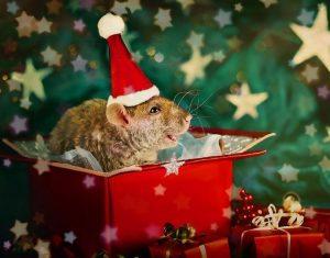 картинки крысы на новый год 023