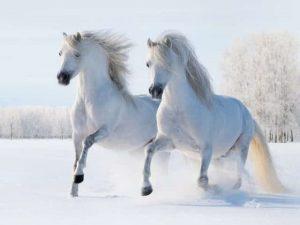 картинки лошади на новый год 023