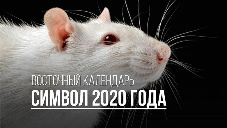 картинки на тему год крысы 024