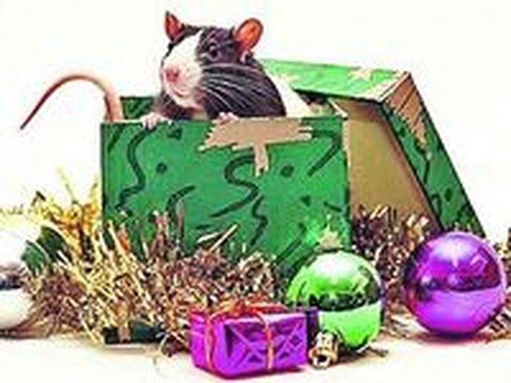 картинки новый год крысенка 007