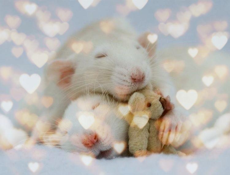 картинки новый год крысенка 017