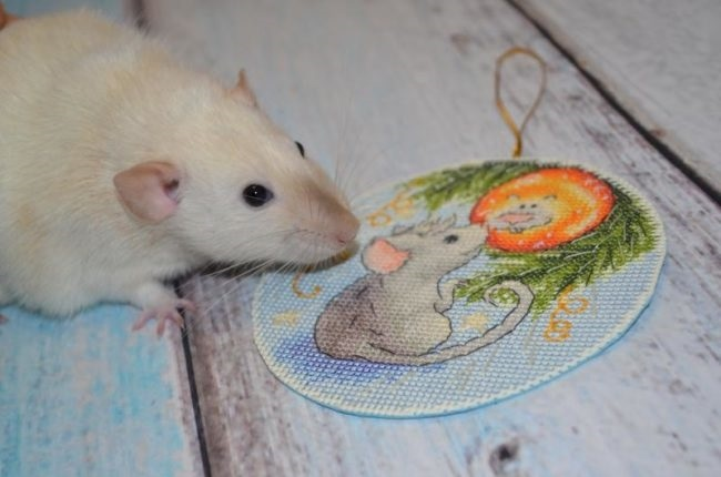 картинки новый год крысенка 019