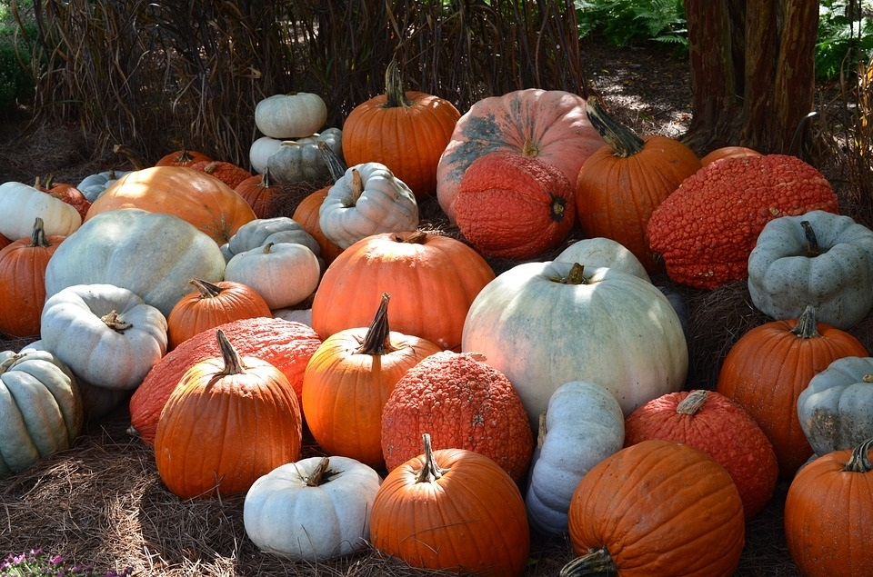 картинки осень хэллоуин 001