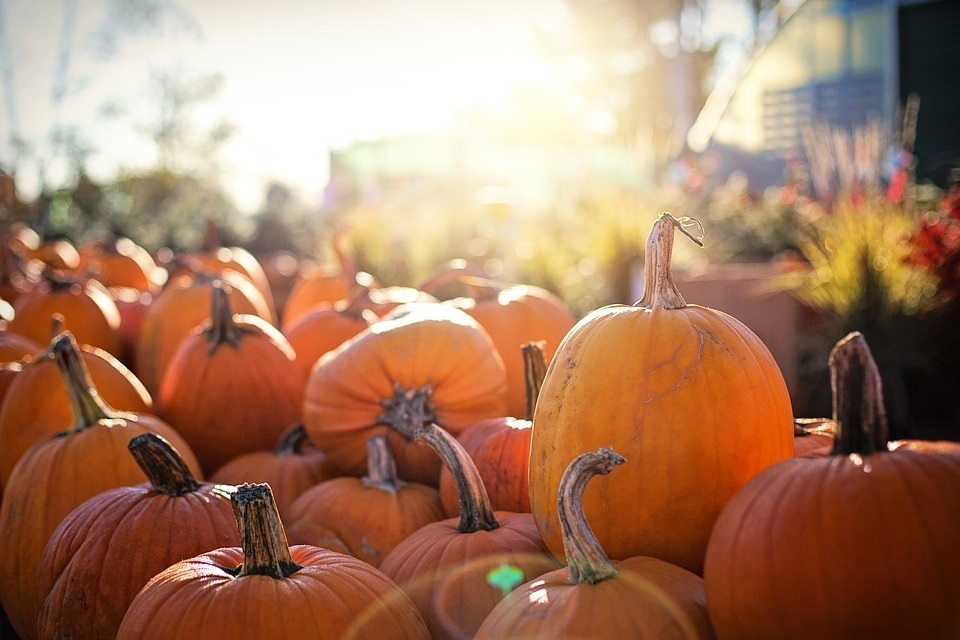 картинки осень хэллоуин 005
