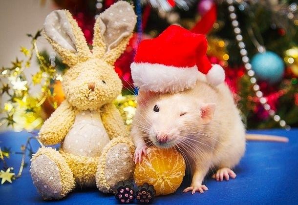 картинки праздника новый год крысы 001