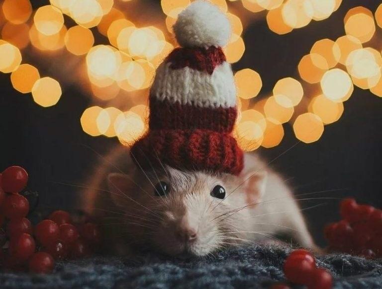 картинки праздника новый год крысы 002