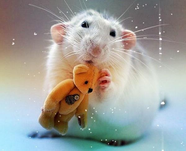 картинки праздника новый год крысы 012