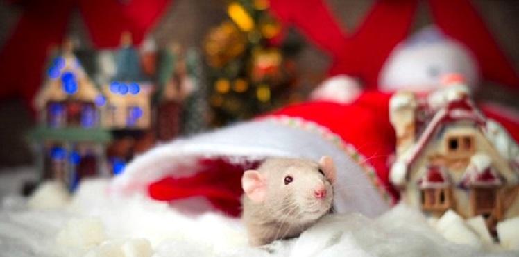 картинки праздника новый год крысы 018