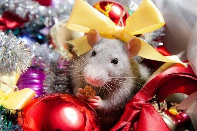 картинки праздника новый год крысы 024