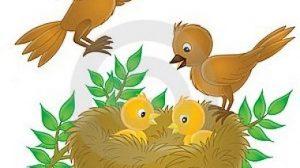 картинки сказочные птички 022