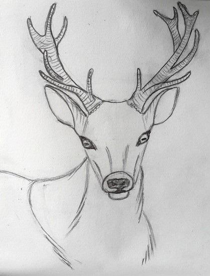 картинки с оленями для срисовки 011