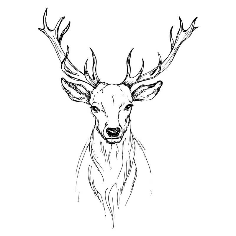 картинки с оленями для срисовки 012