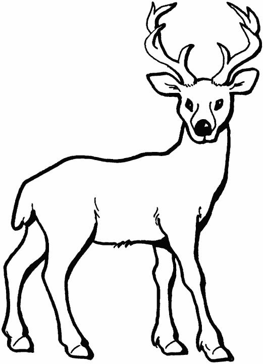 картинки с оленями для срисовки 013