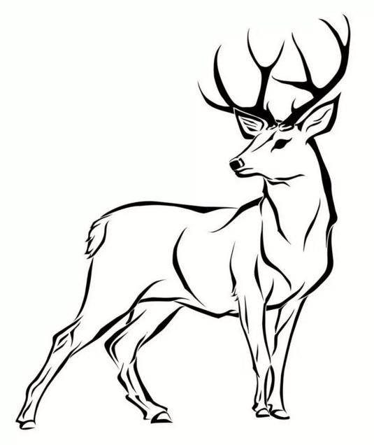 картинки с оленями для срисовки 016