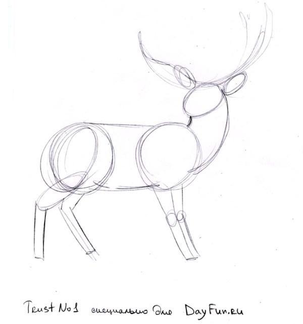 картинки с оленями для срисовки 018