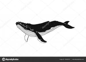 кит контур рисунок 020