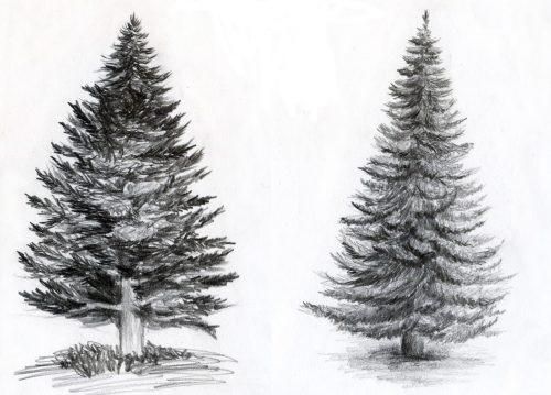 красивые елки рисунки на новый год 003