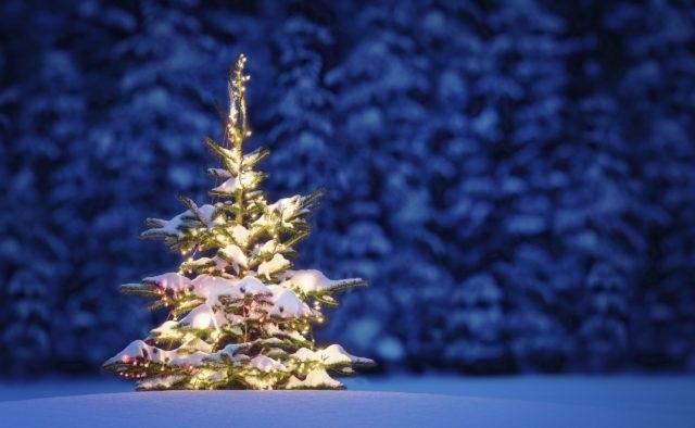красивые елки рисунки на новый год 018
