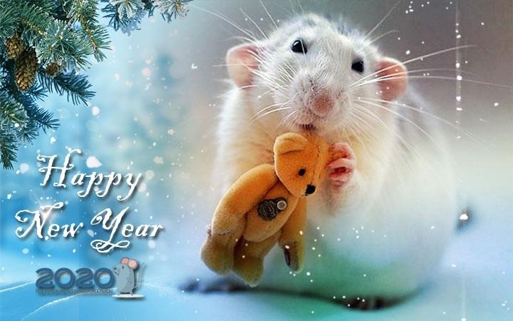 открытки с крысами на новый год что способно