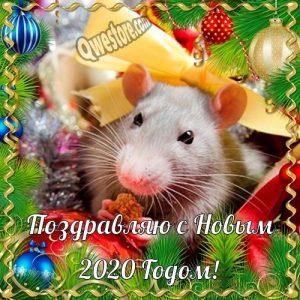 красивые открытки на новый год крысы 2020 022