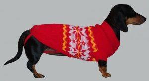 любимый свитер для собаки 020