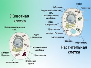 макет животной клетки своими руками 018