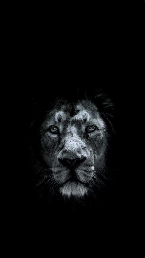 обои льва на айфон 6 001