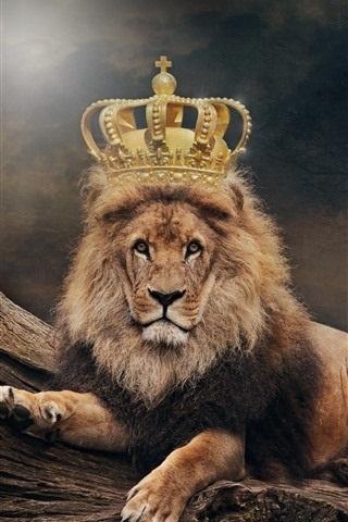 обои льва на айфон 6 002