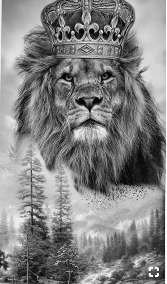 обои льва на айфон 6 010