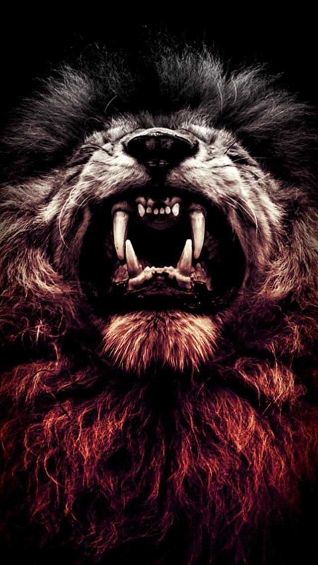 обои льва на айфон 6 017