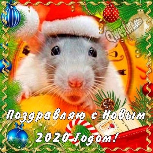 открытки поздравления с годом крысы 020