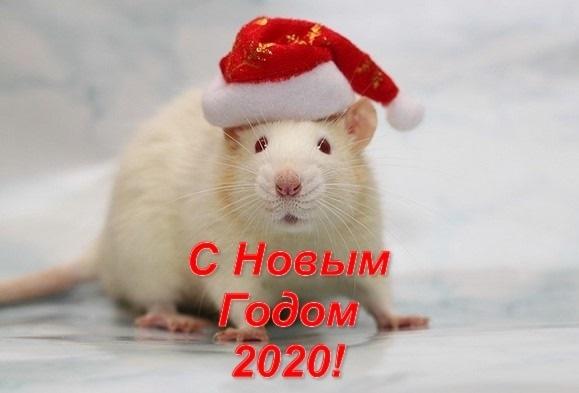 открытки поздравления с новым 2020 годом 016