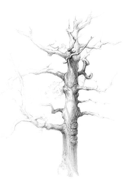 рисунок дерева в графике 020