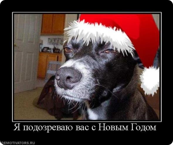 смешная картинка про новый год 014