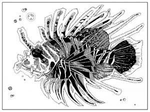 стилизация рыбы в графике 021