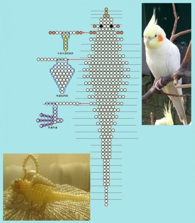 схема попугая из бисера 011