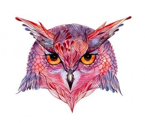 цветная картинка совы 001