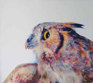 цветная картинка совы 024