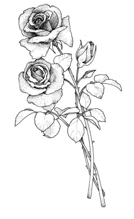 черно белые розы для декупажа 002