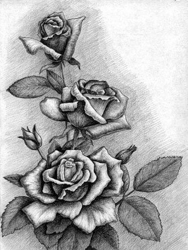 черно белые розы для декупажа 005
