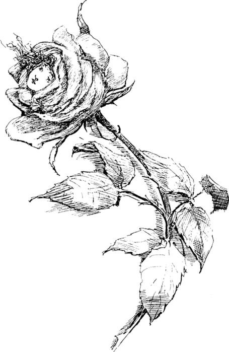 черно белые розы для декупажа 008