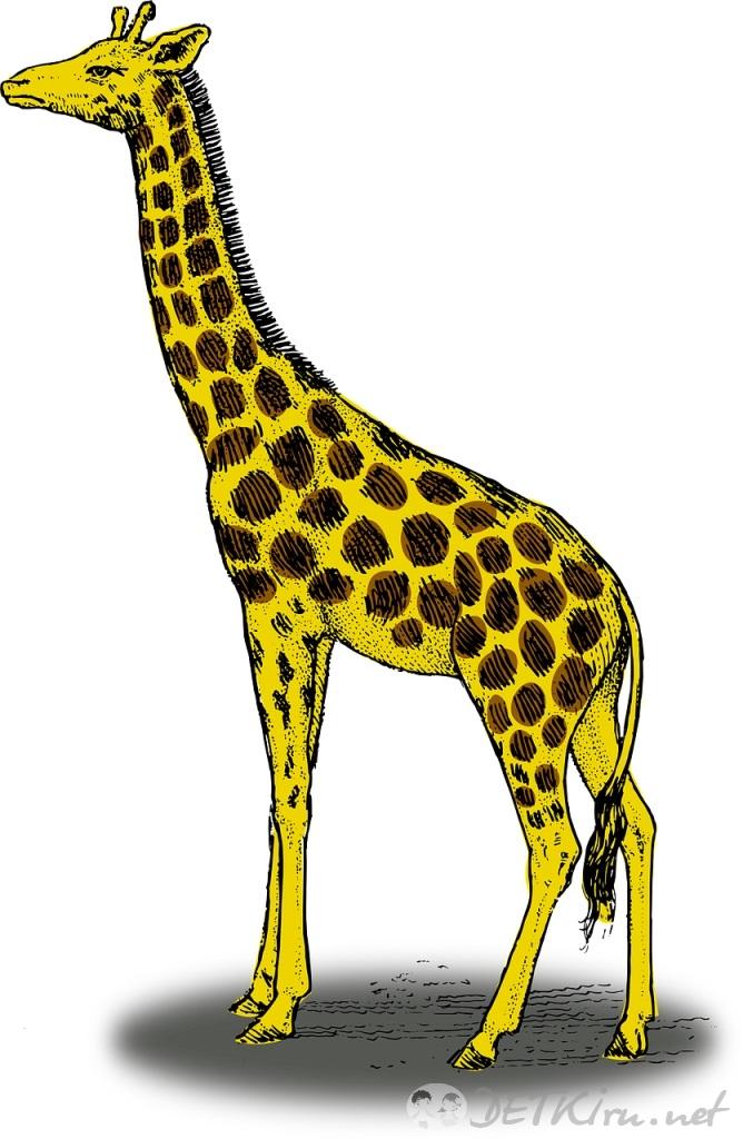 Жираф рисованные картинки
