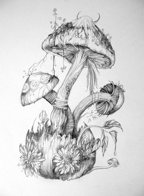 эскизы грибов 002