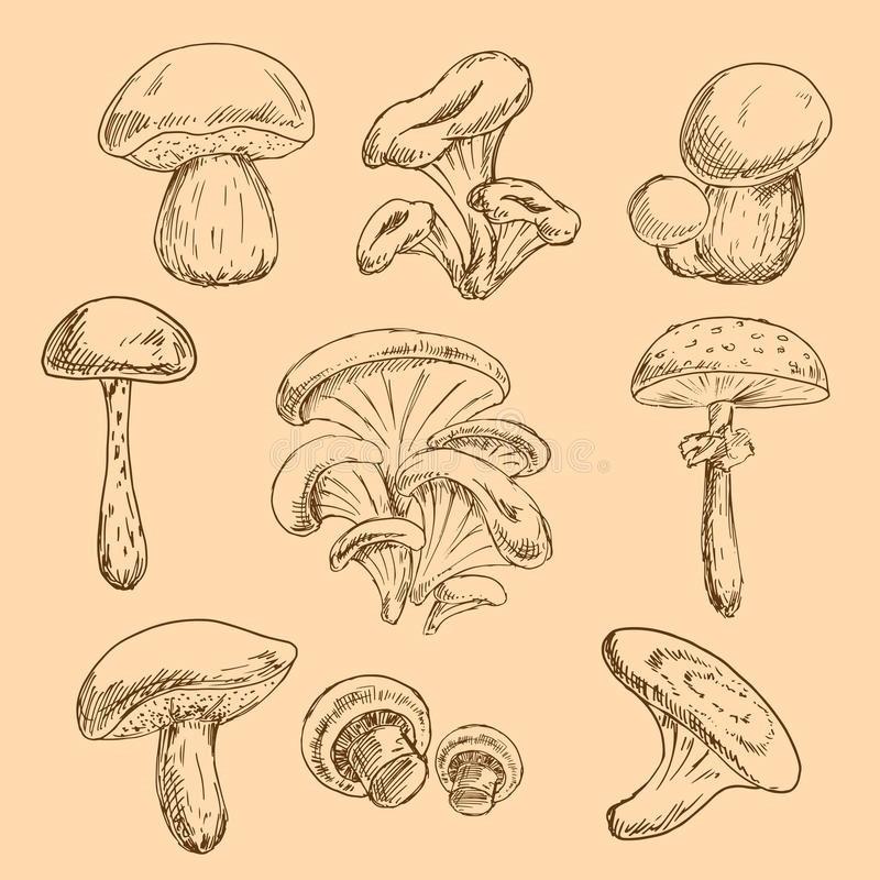 эскизы грибов 004
