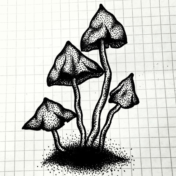 эскизы грибов 007