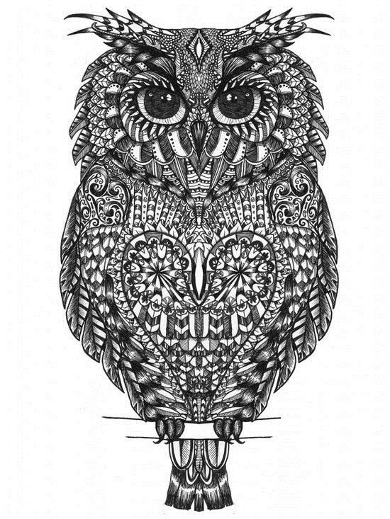 эскизы рисунки совы 001