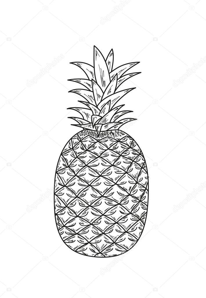 эскиз ананаса 003