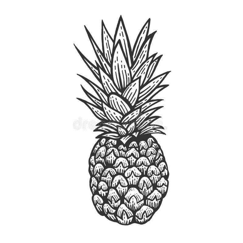 эскиз ананаса 005