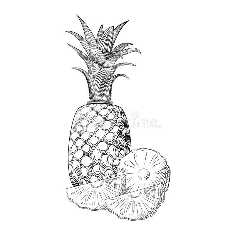 эскиз ананаса 007