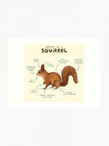 squirrel art 010